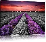 wunderschönes Lavendelfeld in der Provence schwarz/weiß Format: 100x70 auf Leinwand, XXL riesige Bilder fertig gerahmt mit Keilrahmen, Kunstdruck auf Wandbild mit Rahmen, günstiger als Gemälde oder Ölbild, kein Poster oder Plakat