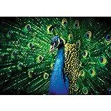 Vlies Fototapete PREMIUM PLUS Wand Foto Tapete Wand Bild Vliestapete - Pfau Tiere Pfauenauge Feder Augen - no. 2937, Größe:368x254cm Blueback Papier