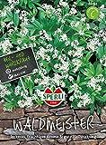 Sperli-Samen Waldmeister SPERLI's Grüner Mai