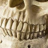 Halloween Deko Totenschädel Totenkopf Lebensgroß Menschlichen Schädel Figur Modell für Anatomischen - 5