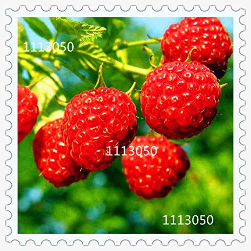100-semi-pacchetto-balcone-patio-vaso-di-frutta-alberi-semi-piantati-lampone-seeds