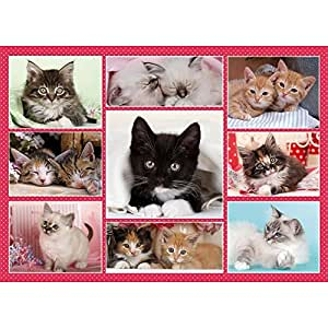 Otter House - Cute Kittens - 1000 Piece Jigsaw Puzzle