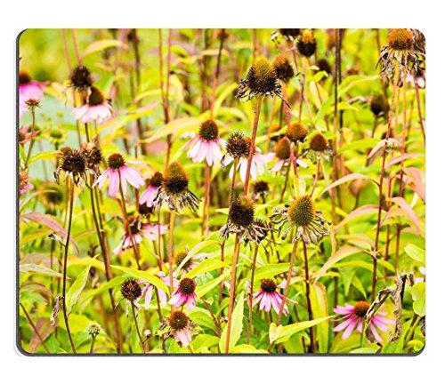 luxlady Naturkautschuk Mousepads Bild-ID 31452165blühen und übertrieben Pink–Dekokranz/Türkranz–artplants oder Echinacea purpurea Pflanzen in den frühen Herbst Saison