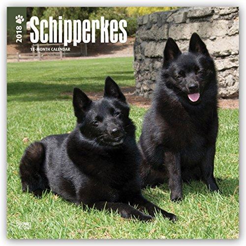 Descargar Libro Schipperkes 2018 - 18-Monatskalender: Original BrownTrout-Kalender - mit freier DogDays-App de Browntrout Publishers