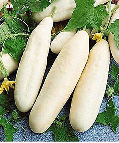 Hot vente 100 graines de fruits concombre Graines jaune vert blanc rouge concombre graines comestibles de semences de légumes Bonsai Maison et jardin rouge