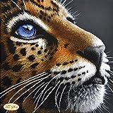 HomeHobbyArt Stickbild mit Perlen Komplette Stickpackung Tiger Tiere 30x30 cm Stickset Stickerei Set Handarbeit Stickvorlage vorgedruckt vorgezeichnet Bild zum Selber Sticken