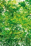 Fototapete Bamboo - Größe 183 x 254 cm