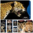 [12 Pack] RFID Blocking Sleeves - Contactless card protection. Stunning Designer Set Credit & ID Card Protector Sleeves, Ideal for Wallet / Passport Protectors - Full Protection by Shielding Contactless RFID & NFC Radio Chips - 'Cats of the World' Series