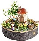 Royal Gardineer Mini Gärten: Handgefertigter Pilzhaus-Zwergengarten, Wasserfest (Miniatur-Garten-Set)