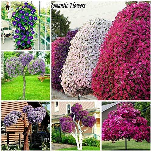 FARMERLY Samen Paket: Petunia großer Baum Bonsai Seedss Blütenblätter rotierende Serie Bonsais 100pcs: Grün -