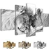 Bilder 200 x 100 cm - Löwen Liebe Bild - Vlies Leinwand - Kunstdrucke -Wandbild - XXL Format – mehrere Farben und Größen im Shop - Fertig Aufgespannt !!! 100% MADE IN GERMANY !!! - Afrika – Tier 002151c