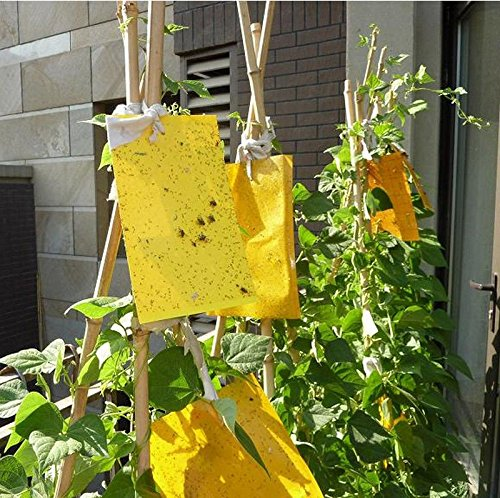 x10-large-area-yellow-sticky-glue-flying-insect-trap-poison-freeno-odor