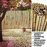 casa pura® Bambus Sichtschutz   Bambusmatte in Premiumqualität, massive Bambusrohre   naturbelassen   drei Größen (150x250cm, HxB)