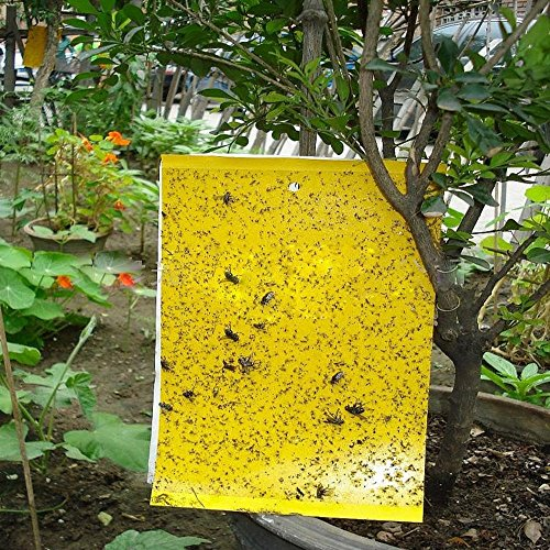 high-effect-30-piece25cm20cm-double-sided-fly-traps-yellow-sticky-traps-for-white-flies-aphids-leaf-