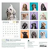 Image de Wet Dog 2016 Calendar