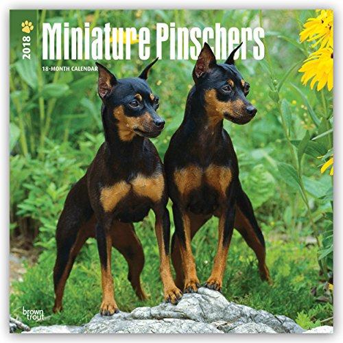 Descargar Libro Miniature Pinschers - Zwergpinscher 2018 - 18-Monatskalender: Original BrownTrout-Kalender - mit freier DogDays-App de Browntrout Publishers