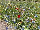 50 -75 m² Blumenwiese (Saat ohne Gras, mit Saathelfer) - für feuchte Standorte 500g - Blumenmischung Insektennektar Bienenweide Schmetterline Hummeln