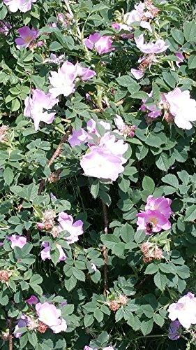 Biermann Pflanzen b21700393-15