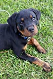 So Cute Rottweiler Puppy Dog Pet Lined Journal