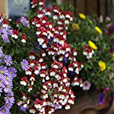Nemesia Mello Semi rossi e bianchi - Nemesia strumosa
