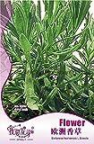 SwansGreen Heißen verkauf 60pcs Satureia Hortensis Samen, Vernal Grassamen, Bohnenkraut, Vanilla Seed-Hausgarten Topfpflanze Freies Verschiffen