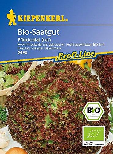 Pflücksalat Lollo Rossa Bio – Saatgut