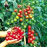 Shopmeeko 200pcs / Bag Piante rampicanti Pomodoro ciliegino Piante organiche Verdure Pomodoro Albero Non-OGM Cibo Bonsai casa Giardino pianta