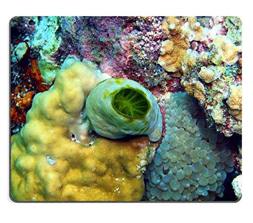 liili-mouse-pad-in-gomma-naturale-mousepad-immagine-id-24812728-mare-squirt-isola-maktan-filippino