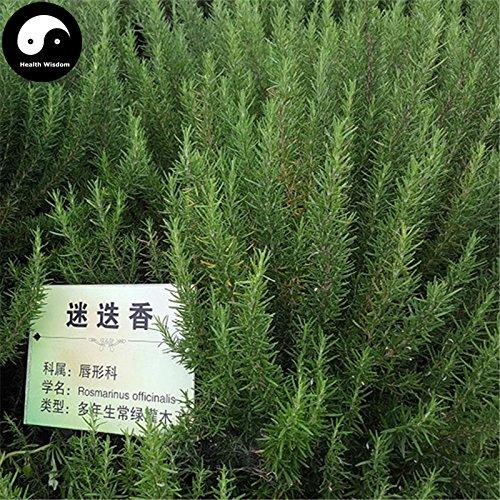 Kaufen Rosmarinus officinalis Baumsamen 60pcs Pflanze Rosmarin Baum Mi Xiang Die