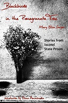 Blackbirds in the Pomegranate Tree (English Edition) de [Sanger, Mary Ellen]