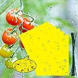 BaiYou Atrapa Moscas Adhesivo Trampa Moscas Fruta 16 Rollos ...