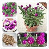 PinkdosePinkdose Blumensamen: Gomphrena Einjährige Blume Pflanzensamen Garten Blumen Samen Gartenhecke (8 Packete) Garten Pflanzensamen Von