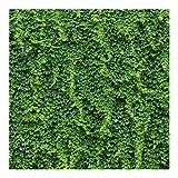 Vliestapete - Efeu - Fototapete Quadrat Vlies Tapete Wandtapete Wandbild Foto 3D Fototapete, Größe HxB: 192cm x 192cm
