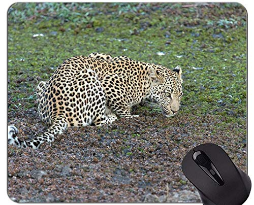 Rutschfeste Gummi-Gaming-Mausunterlage, Leopard-Katzen-Familien-Leopard-Mausunterlagen