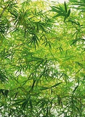 1art1 40531 Pflanzen - Bambus 4-teilig, Fototapete Poster-Tapete (254 x 183 cm) von 1art1 - TapetenShop