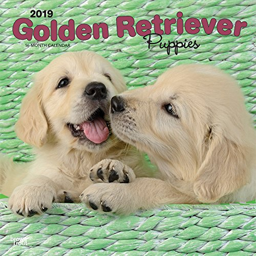 Golden Retriever Puppies - Golden Retriever-Welpen 2019 - 18-Monatskalender mit freier DogDays-App (Wall-Kalender) -
