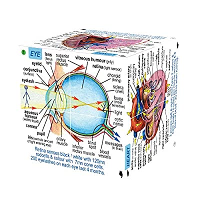 ZooBooKoo Scientific Human Body Cube Book - Systems and Statistics from Zoobookoo International Ltd