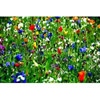 500g 100% Pure Flower Seed PRETTY WILD SEEDS Mix 30 Pure Wild Flower Meadow S Premium Seeds Mix 30 500g