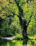 Notebook: Tree spring mirroring waters leaves green forest wood shrub bark eucalyptus oak birch