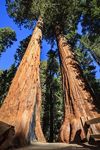 Giant Redwood Tree (Walking Among the Giant Redwood Trees Journal: 150 Page Lined Notebook/Diary)