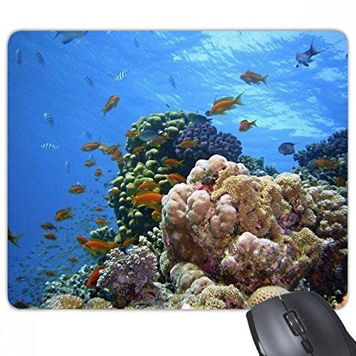 beatChong Seefisch Coral Wissenschaft Natur Bild Rechteck Griffige Gummi Mousepad Spiel Mauspad Geschenk