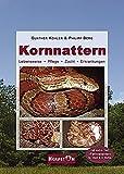 Kornnattern: Lebensweise, Pflege, Zucht, Erkrankungen - Gunther Köhler