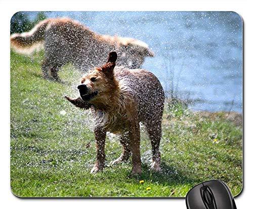 Gaming-Mauspads, Mauspad, Dog Nature Lawn Animal Fauna