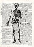 Fertig-Bild - Christopher James: Vintage Anatomy Skeleton 24 x 30 cm Skelett Anatomie Mensch Medizin Arzt Kult