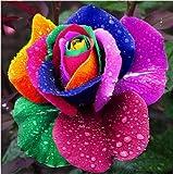 150 Samen Regenbogen Rose Bunte Blumensamen