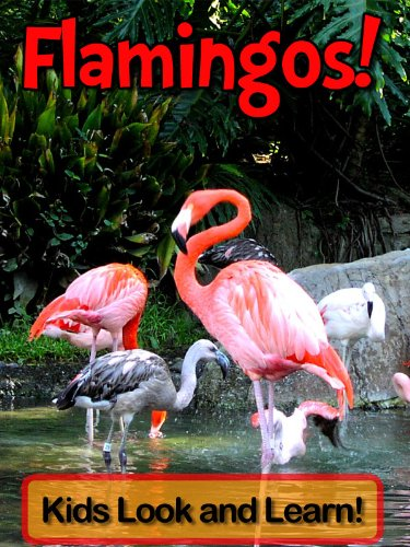 Flamingos! Learn About Flamingos and Enjoy Colorful Pictures - Look and Learn! (50+ Photos of Flamingos) (English Edition)