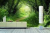 WandbilderXXL® Vlies Fototapete Waldweg 240x160cm - hochwertige Tapete in 6 verschiedenen Größen für Wohnzimmer oder Büro - Foto Tapete - Qualität von Wandbilder XXL