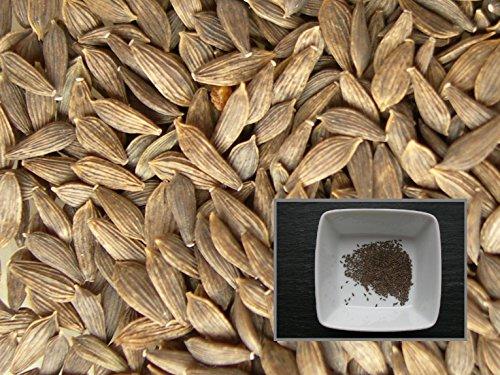 Laitue Feuille De Chêne Rouge Bowl Rouge - 70 graines - Lactuca Sativa L. Convar.Incota Helm Var. Crispa L. - Red Oak Leaf Red Bowl Leaf - SEM02
