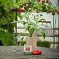 """Minigarten Paprika """"Lubega Red"""" von den Stadtgärtnern ✿ Komplettes Anzuchtset für knackige, rote Paprika ✿ Gesiebte Erde, bestes Saatgut & eine ausführliche Anleitung von Die Stadtgärtner bei Du und dein Garten"""