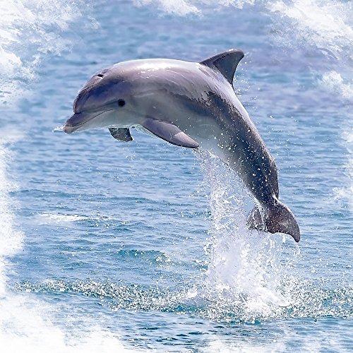 Apple iPhone 5s Housse étui coque protection Dauphin sautant Dauphin Baleine Sac Downflip noir